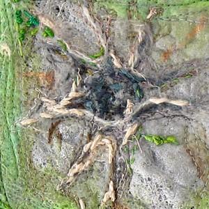 pseudo bombax ellipticum_30 x 30cm_2011
