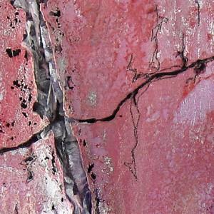 pinus pinaster_30 x 30cm_2011