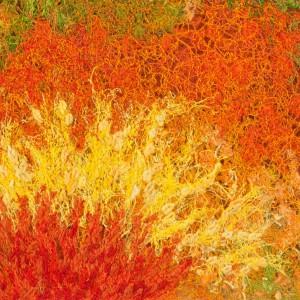 Autumn im Algonquinparc_43 x 26 cm_2015